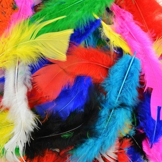 Feathers-pk.bright Colours (250)